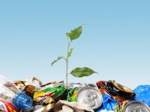 Pflänzchen wächst aus Müll