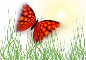 Schmetterling fliegt zur Sonne