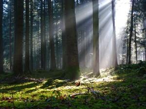 Wald mit Sonnenlicht