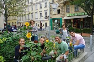 Sonnenblumen anpflanzen im 7. Wiener Gemeindebezirk