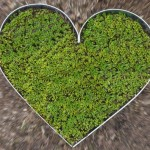 Herz mit Kressepflänzchen