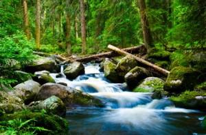Bild: Wald mit Bach