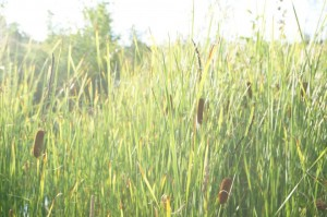 In Waldgärten halten sich Menschen gerne auf. Die grüne Natur entspannt und fast jede Pflanze kann genascht werden.