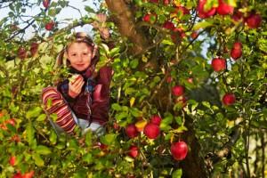 Bild: Kind im Apfelbaum