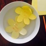 Experiment mit Wasser-Papier-Blumen