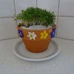 Kresse anpflanzen