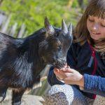 Wwoofen in Australien mit drei Kindern
