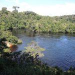 Mit Einkauf den Amazonas-Regenwald schützen