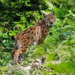 Woche der Artenvielfalt