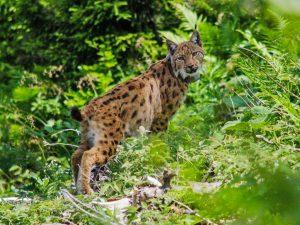 Der Natur nachspüren - wie hier im Nationalpark Kalkalpen in der Woche der Artenvielfalt von 19. bis 28. Mai 2017. Foto: Nationalpark Kalkalpen/Kronsteiner