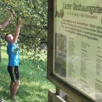 """""""Linz pflückt"""" – selbst gratis Obst ernten!"""