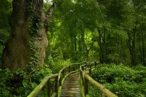 Selva asiática