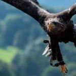 Vorbild Natur: Was die Technik von Tieren und Pflanzen lernt