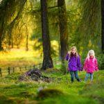 Die wunderbare Heilkraft des Waldes
