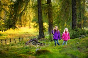 Der Wald als optimale Gesundheitsvorsorge - stärkt das Immunsystem, wirkt entzündungshemmend und macht weniger allergie.anfällig. Foto: Fotolia/MNStudio