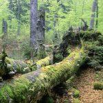 Urwälder in Österreich
