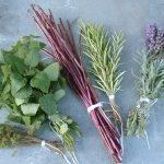 Wildkräuter-Rezepte aus meinem Garten