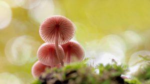 pilze abschneiden oder ausreißen