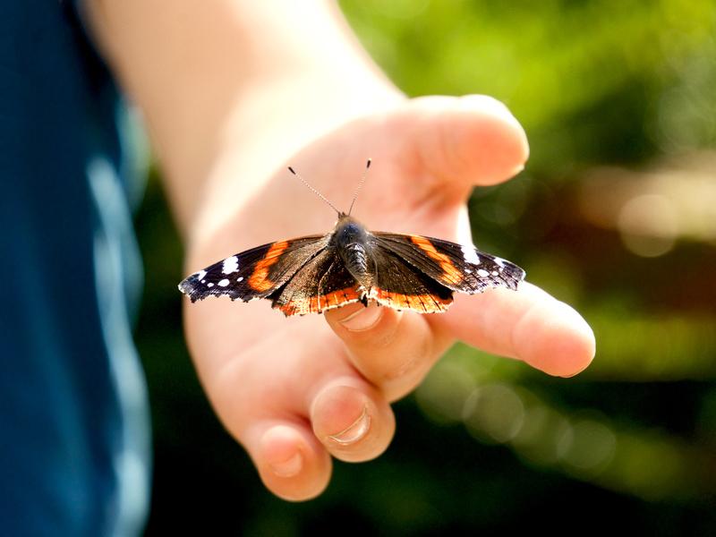 Hochinteressant und entspannend zugleich - im Wald Insekten und anderes Getier beobachten. Foto: Fotolia/derPlan