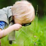 Spuren.Suche: Wald mit allen Sinnen erleben