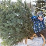 3.12. Weihnachtsbaum aus OÖ