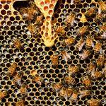 Entdecke die Welt der Bienen