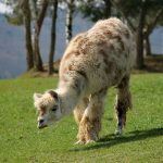 Alles über Lama und Esel!