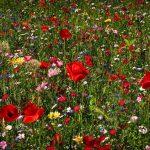 Vom Garten zur Insekten-Heimat
