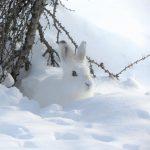 16.12. Tierspuren im Schnee